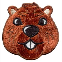 This friendly beaver head is staring straight at the viewer.